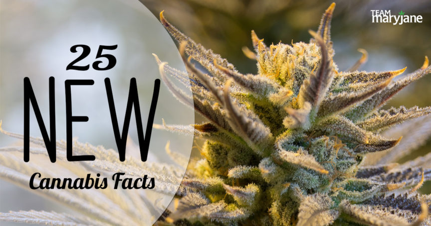 25 New Cannabis Industry Facts